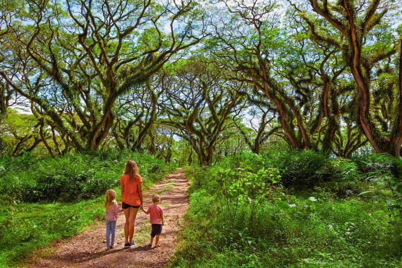 家庭在绿色机盖下在古老森林里 库存图片