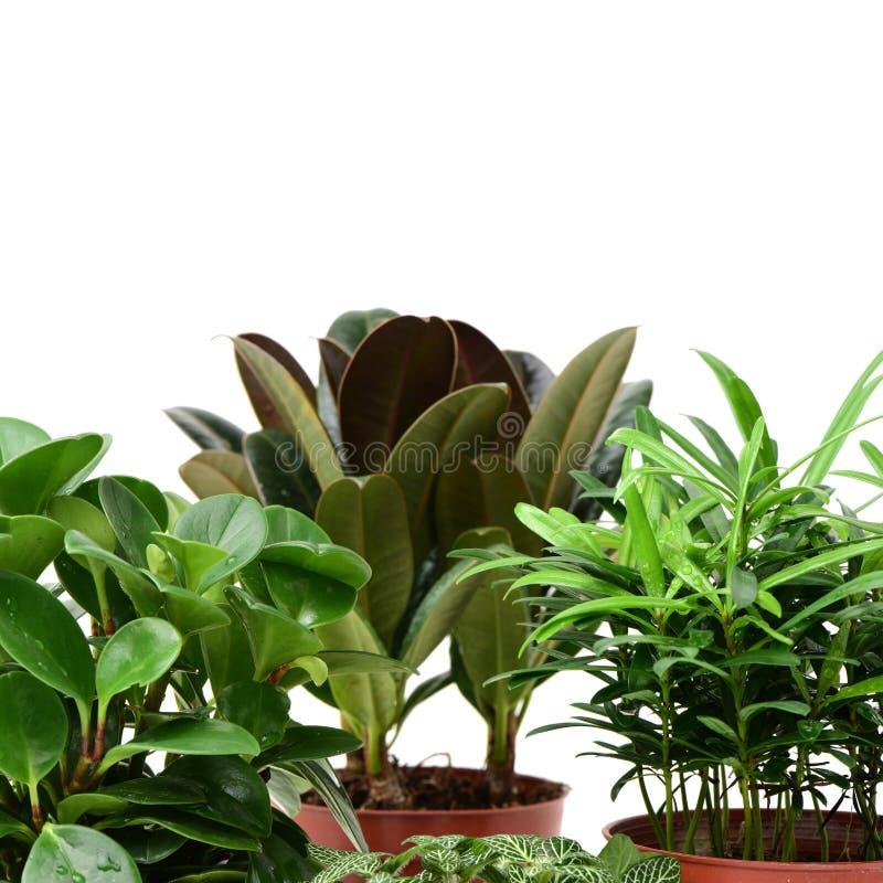 家庭植物罐 库存照片