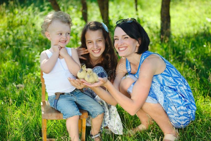 家庭用小的黄色鸭子在夏天公园 库存照片
