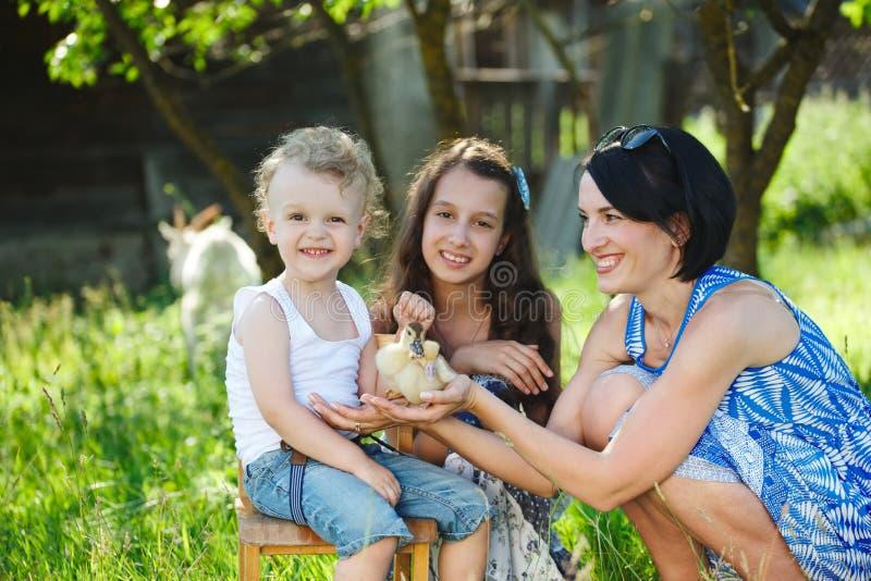 家庭用小的黄色鸭子在夏天公园 库存图片