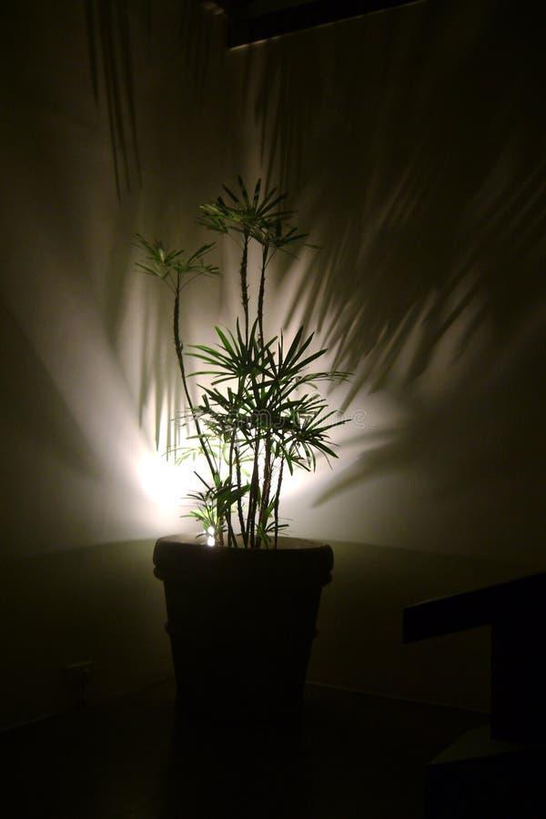 家庭盆栽植物 免版税库存图片