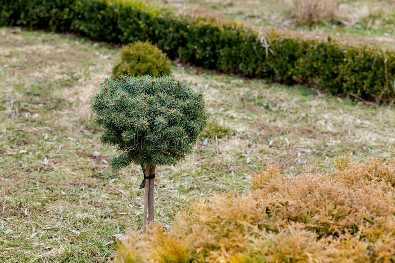 家庭菜园的自然园艺的全景 环境美化的庭院美丽的景色在后院 园艺的区域风景  库存图片