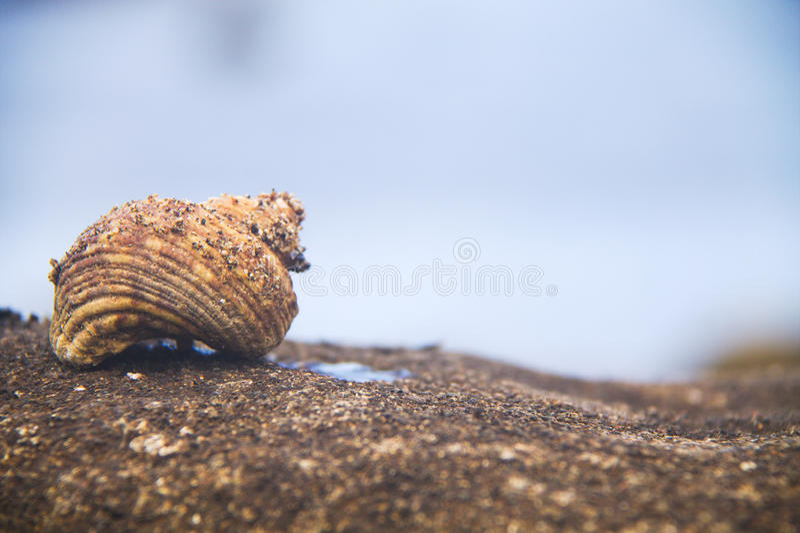 家庭蜗牛 库存图片