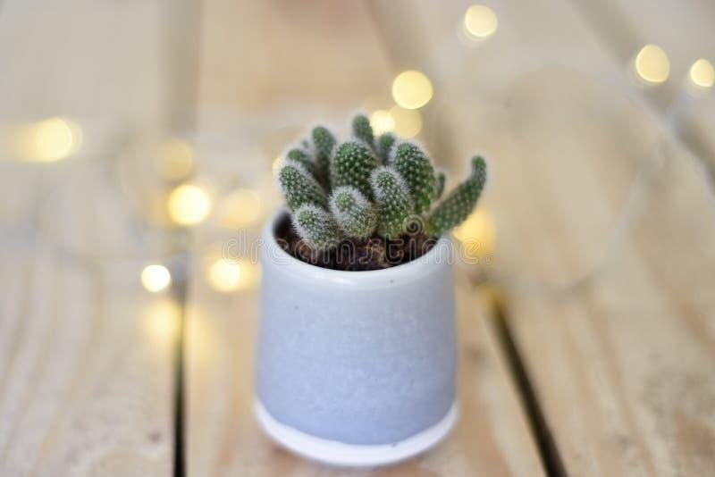 家庭装饰对象,一棵微型仙人掌植物 有彩色小灯的小植物家庭室内装饰的 库存图片
