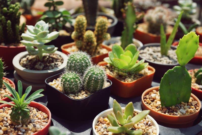 家庭装饰的各种各样的多汁盆栽植物 免版税库存图片