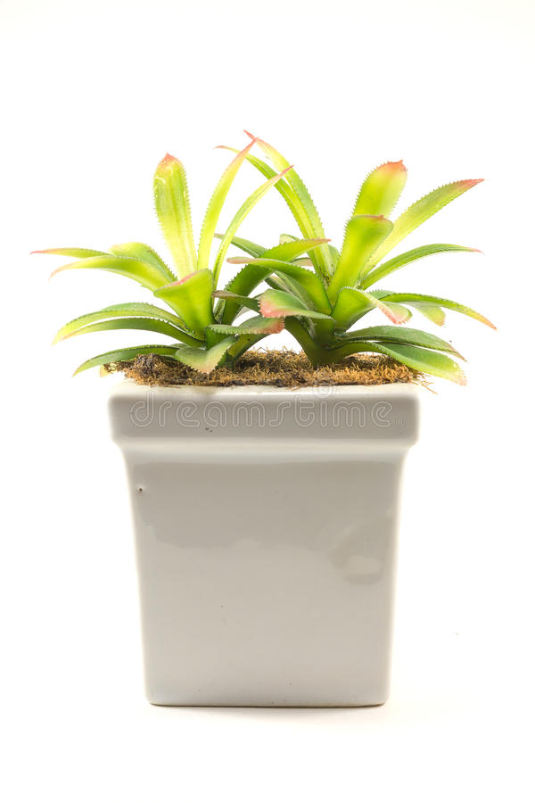 家庭装饰,在一个花瓶的人为树在白色背景 库存照片