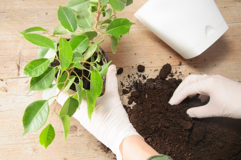 家庭从事园艺的调迁的房子植物 免版税图库摄影