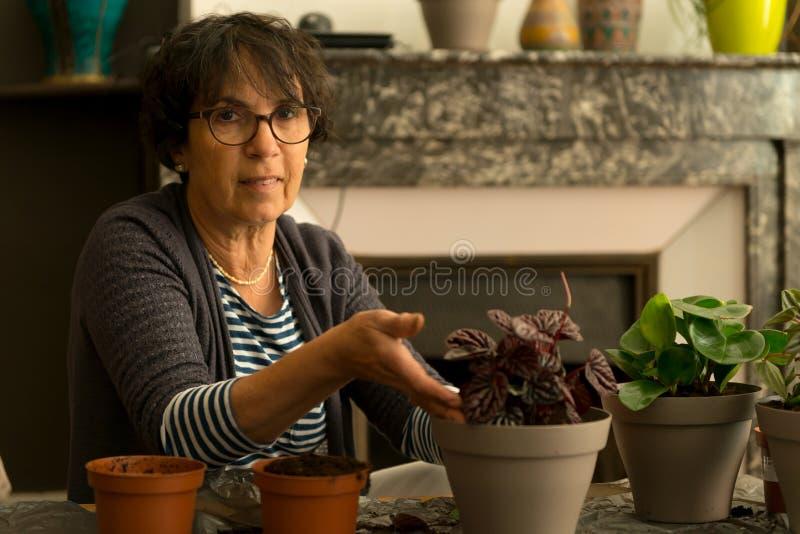 家庭从事园艺的调迁的房子植物 免版税库存图片