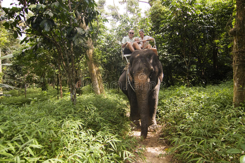家庭Elefant骑马 免版税库存图片