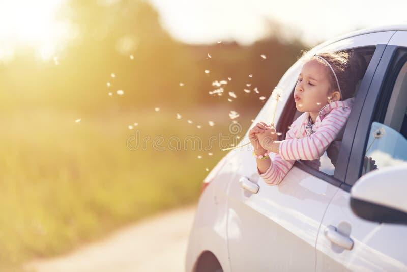 家族旅行概念乘汽车 从车窗的愉快的微笑的儿童女孩吹的蒲公英花 o 免版税库存图片