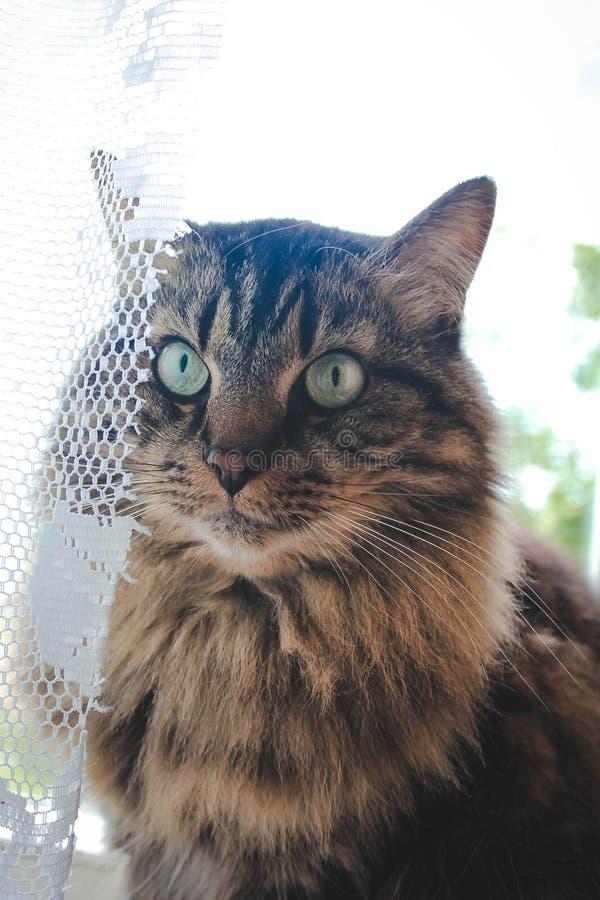 家猫在家 免版税库存图片