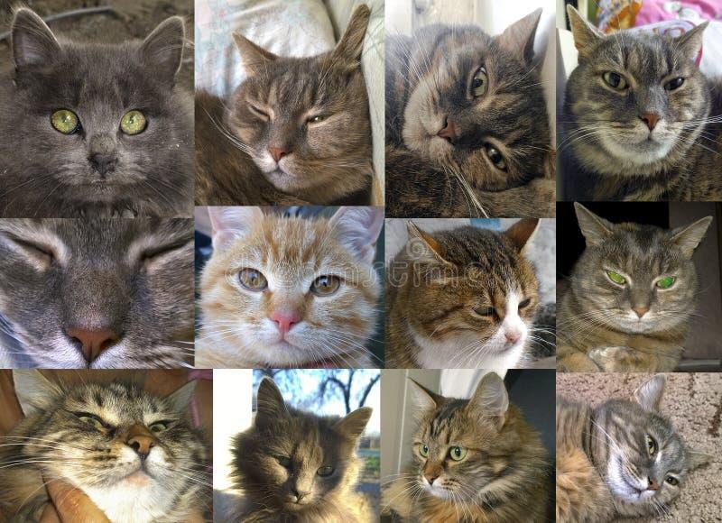 家猫画象  库存照片