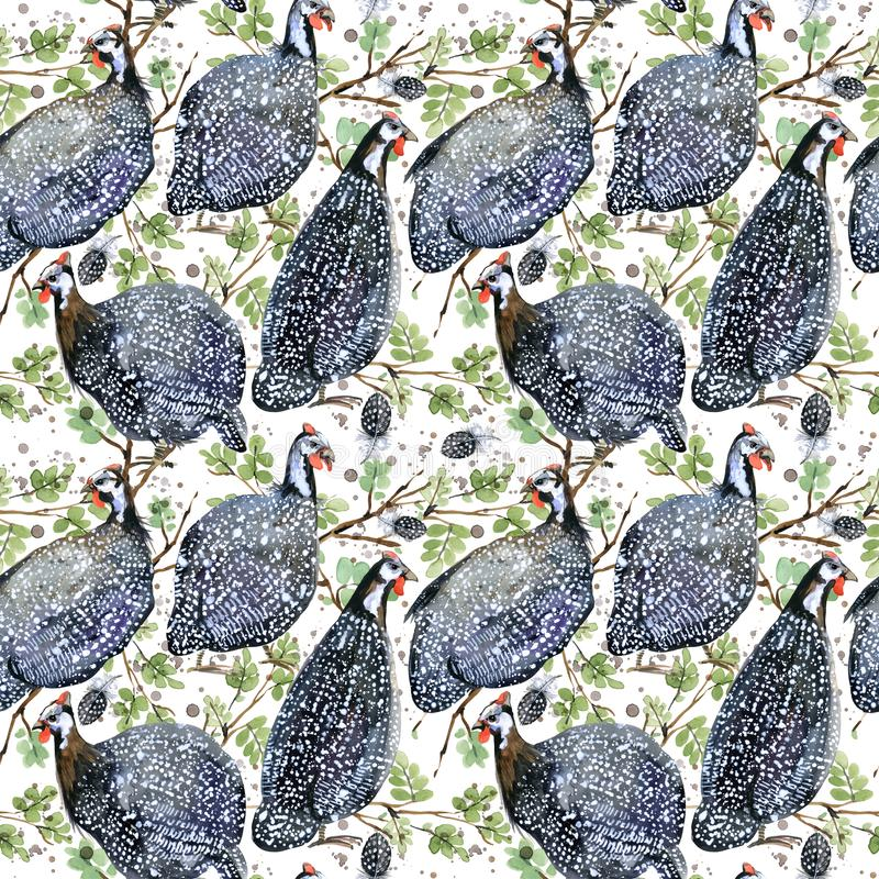 家畜几内亚 狂放的鸟水彩无缝的样式 向量例证