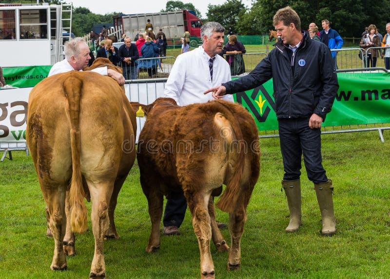 家畜展览会论述 免版税库存图片