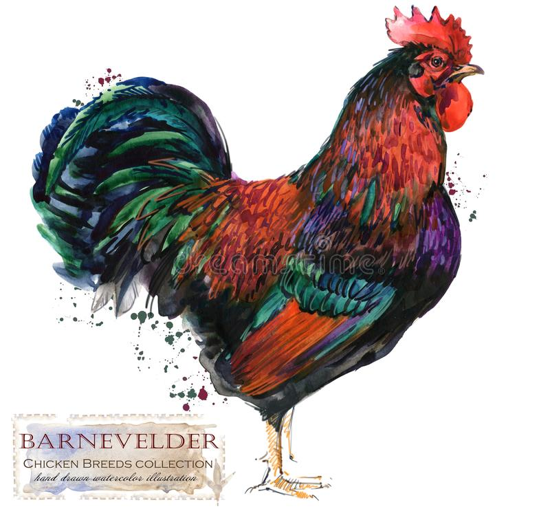 家禽养殖 鸡助长系列 国内鸟水彩例证 皇族释放例证