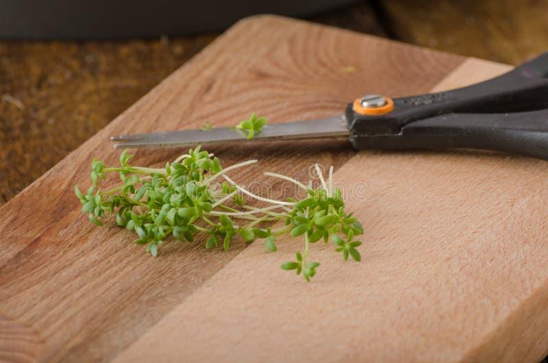 家种的microgreens,水田芥,没有chemicalsScrambled鸡蛋用水田芥,法式多士 库存图片