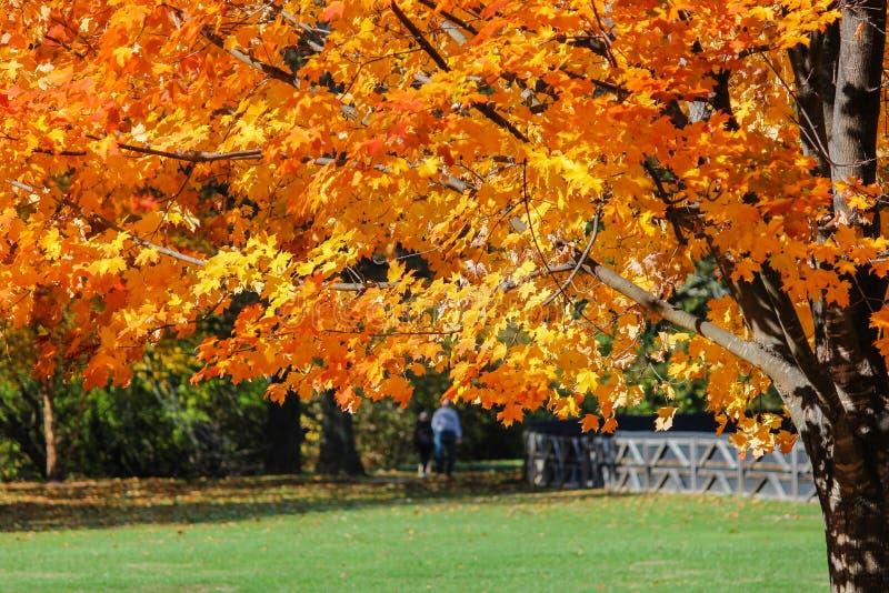 从容不迫的步行通过公园在一晴朗的秋天天 图库摄影
