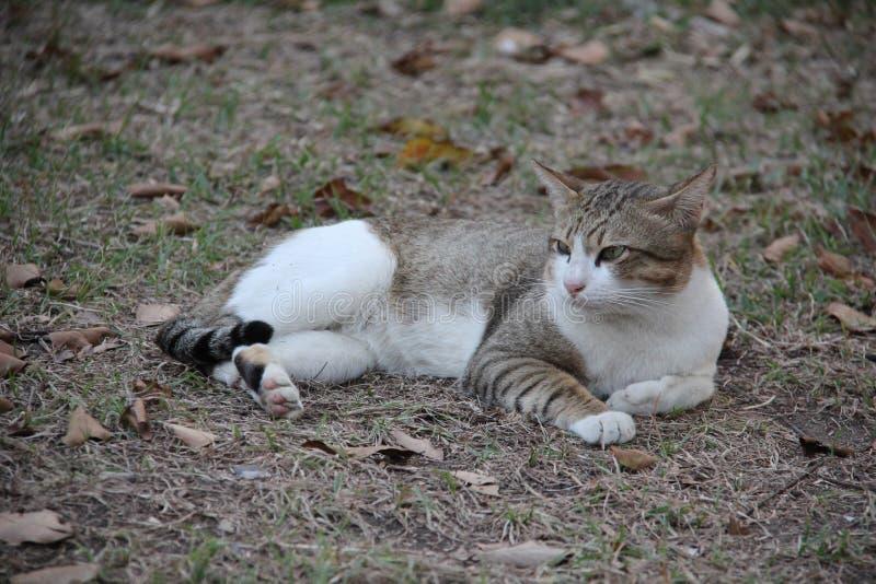 容易的生活方式 一可爱的离群猫蹲坐和注视 免版税库存图片