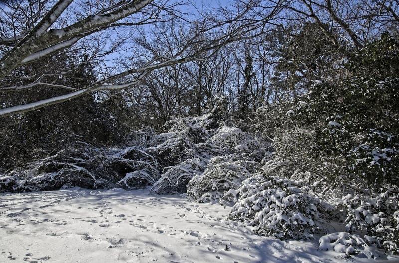 容易编辑图象对结构树向量冬天 库存图片