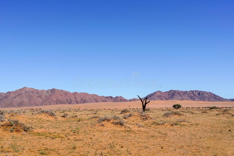 宽典型南部的纳米比亚风景 库存照片