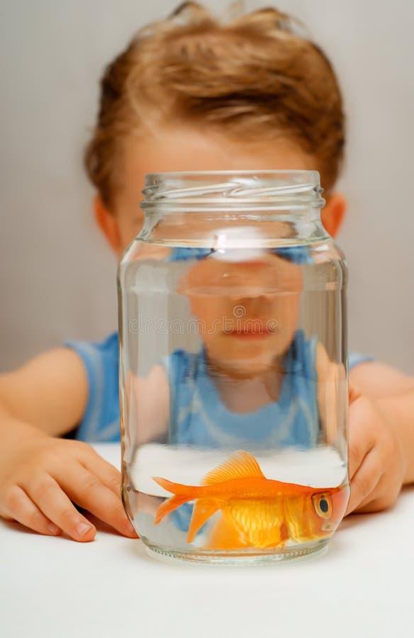 宽害怕的被注视的金鱼 免版税库存图片
