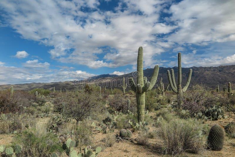 宽沙漠风景 库存照片