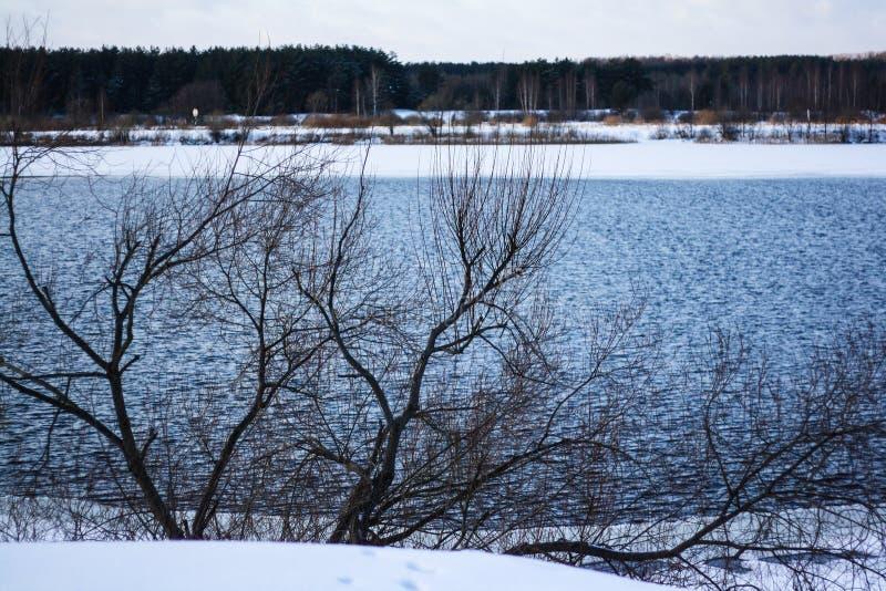 宽河在冬天森林里 免版税库存图片