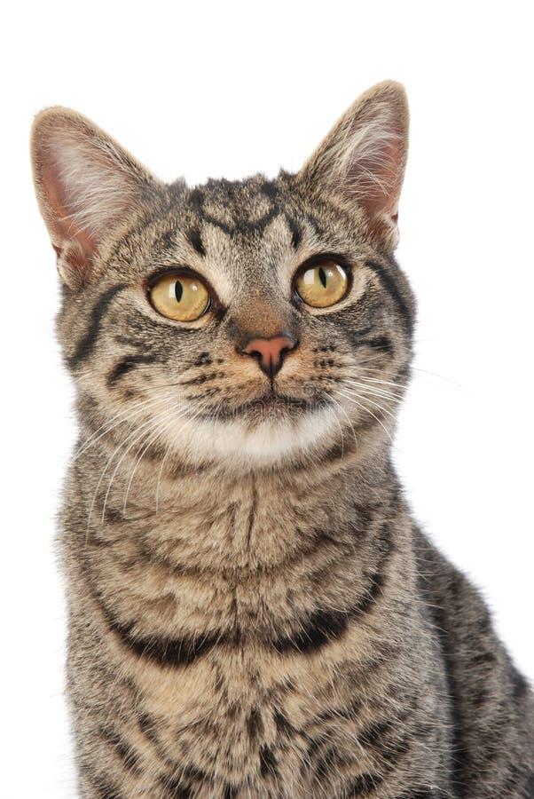 宽被注视的猫 库存图片