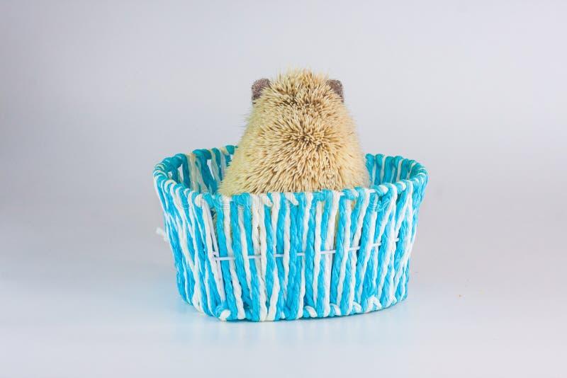 寂寞的概念 孤立啮齿目动物在箱子特写镜头坐 图库摄影