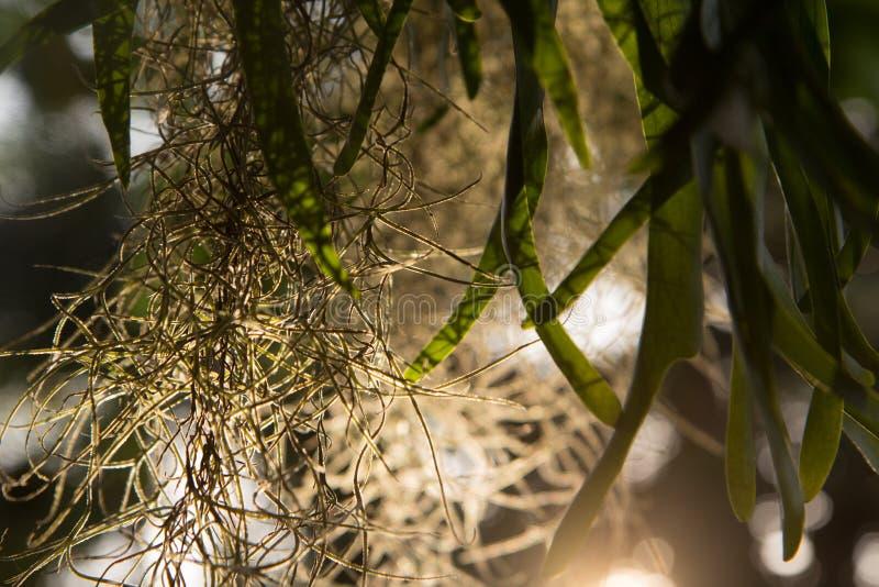 寄生藤,在日落的美好的自然背景 图库摄影