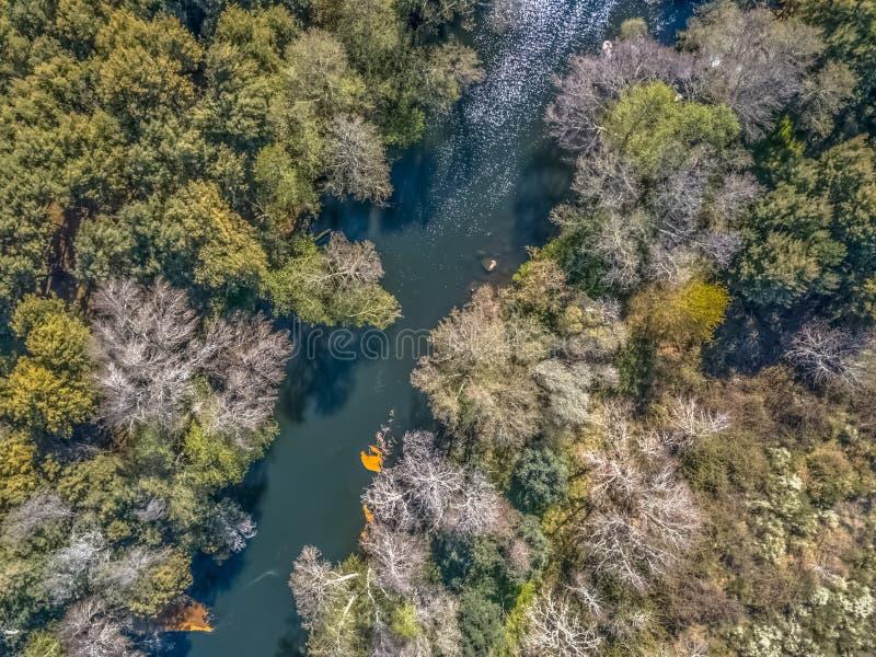 寄生虫、自然风景河与和在银行的色的树鸟瞰图  库存图片