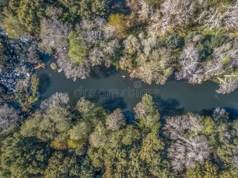 寄生虫、自然风景河与和在银行的色的树鸟瞰图  免版税库存照片