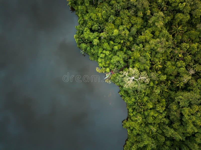 寄生虫被射击密林在雨前 免版税图库摄影