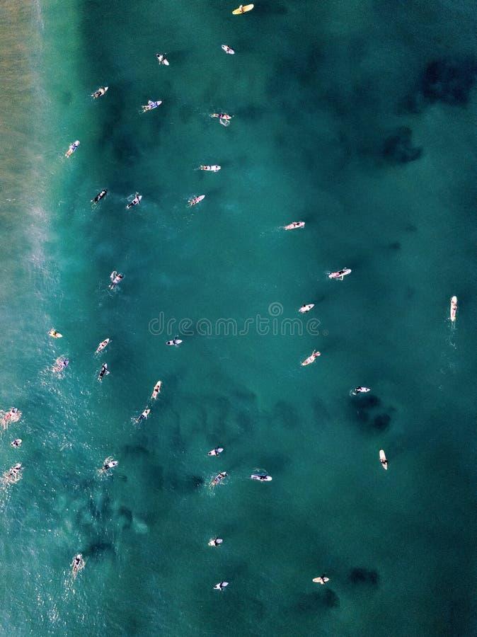 寄生虫观点的冲浪者在海洋 免版税库存图片