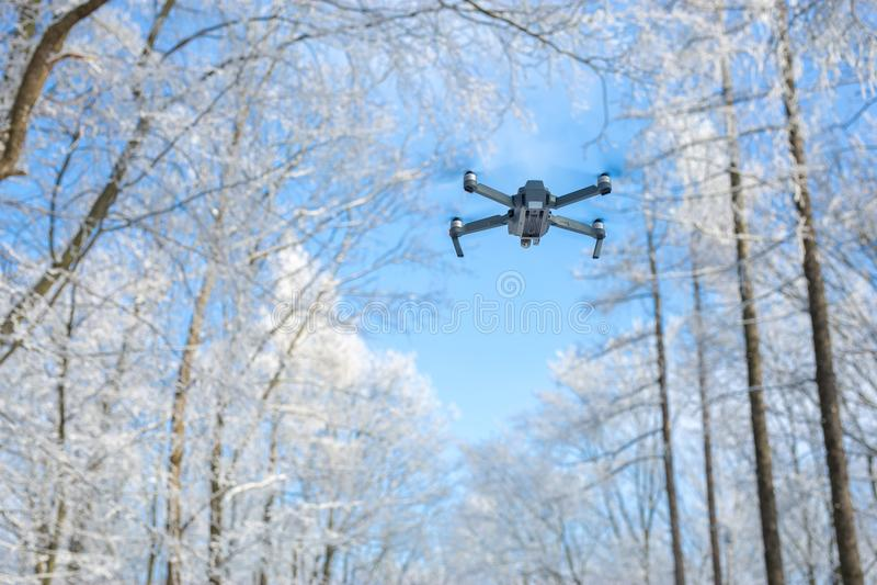 寄生虫飞行在森林里在冬天 免版税库存照片