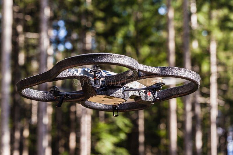 寄生虫飞行通过树 库存照片