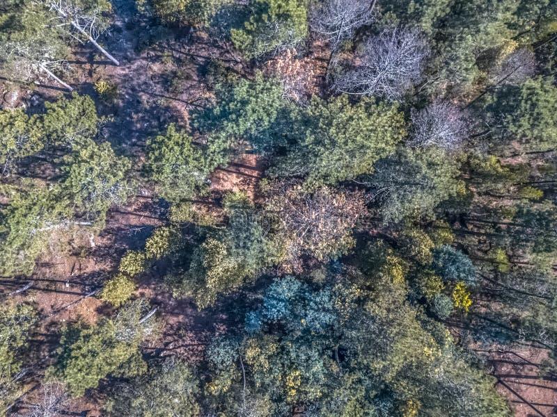 寄生虫鸟瞰图,与典型的葡萄牙树森林、冠,杉木和橡木 库存图片