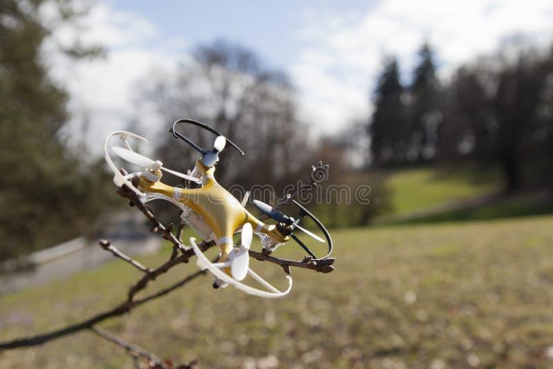 寄生虫quadcopter在树碰撞了在城市公园 免版税库存图片