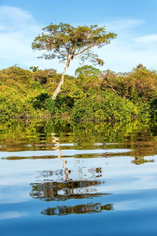 密林反射在亚马逊 免版税库存照片