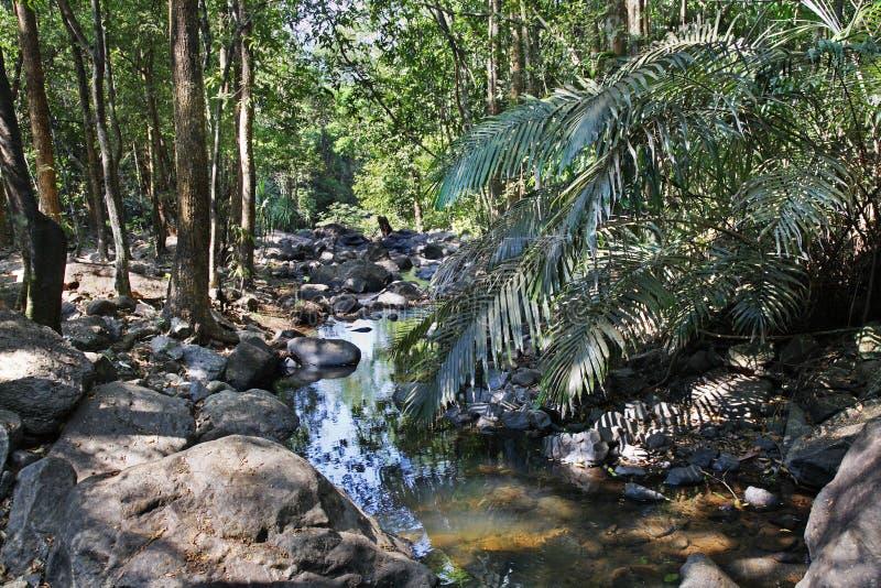 密林和河在卡纳塔克邦 印度 库存照片