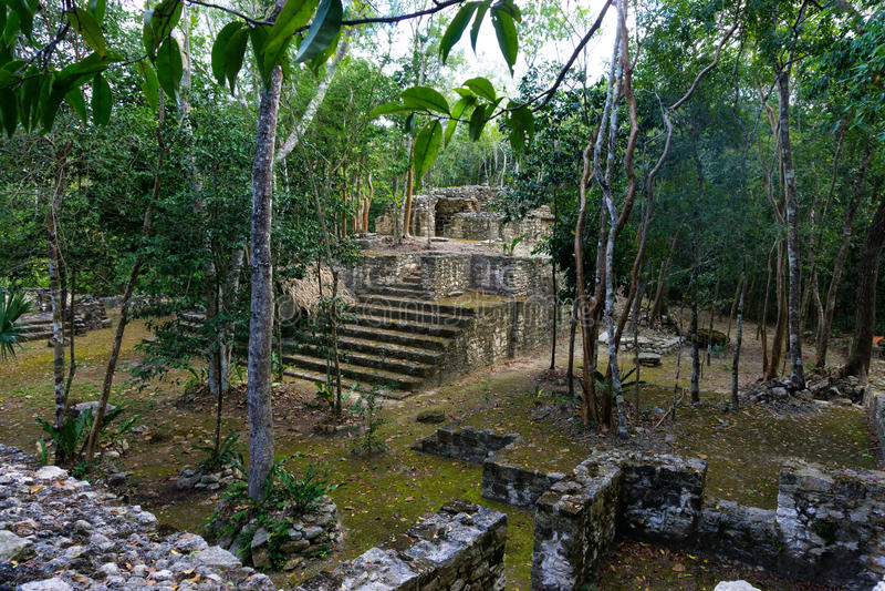 密林和玛雅废墟 库存图片