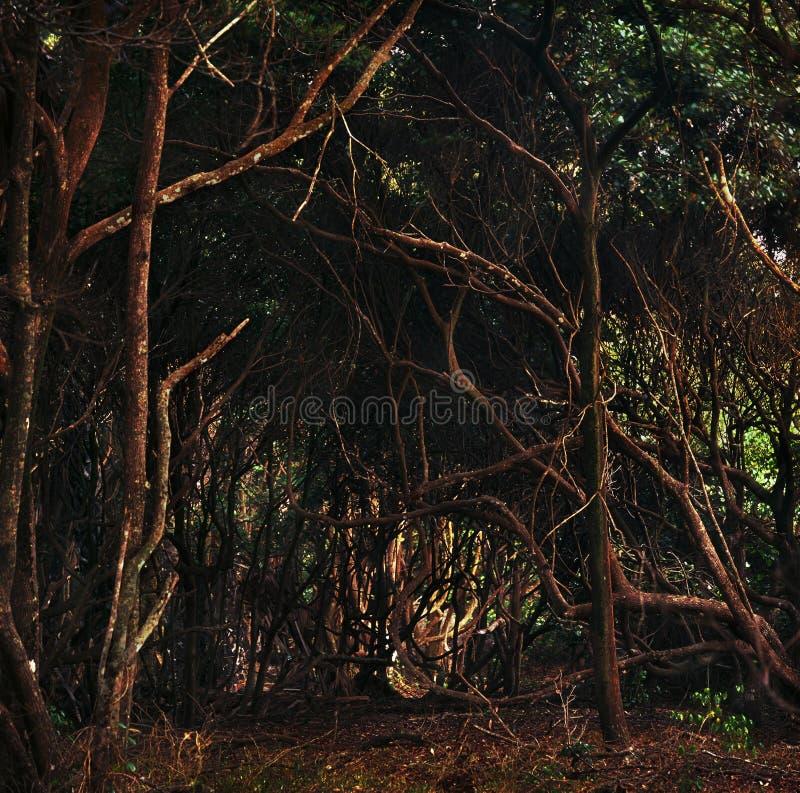 密林在加蓬 图库摄影