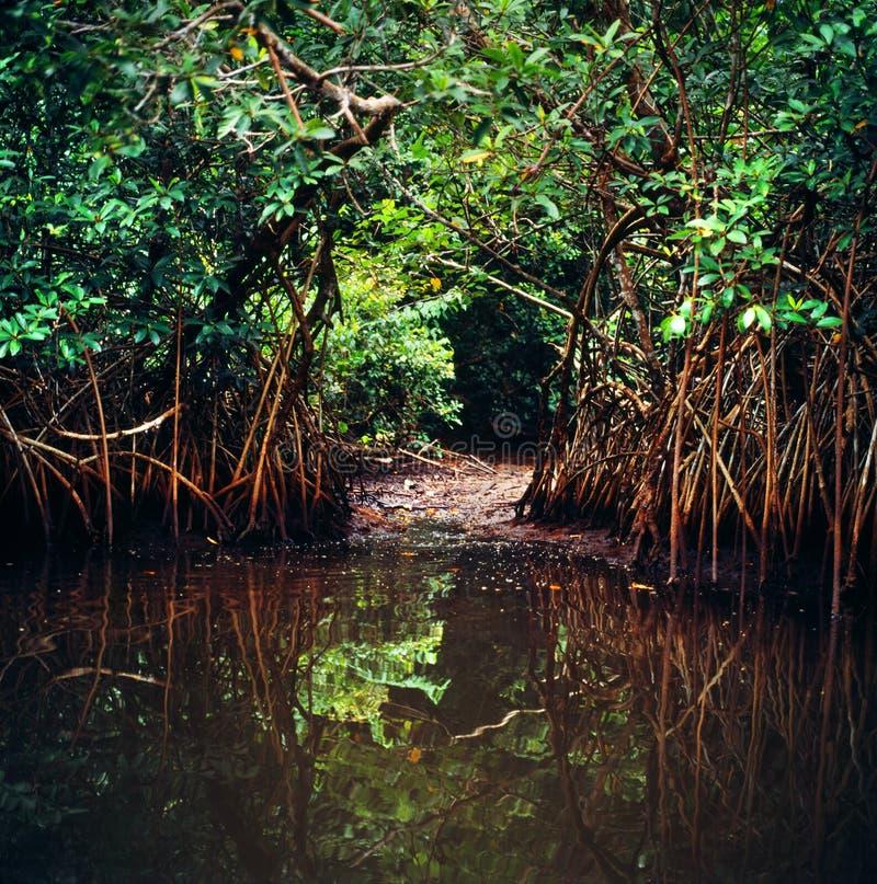密林在加蓬 免版税图库摄影