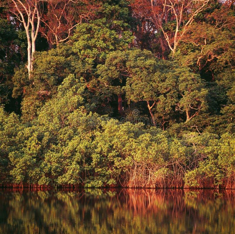 密林在加蓬 免版税库存图片