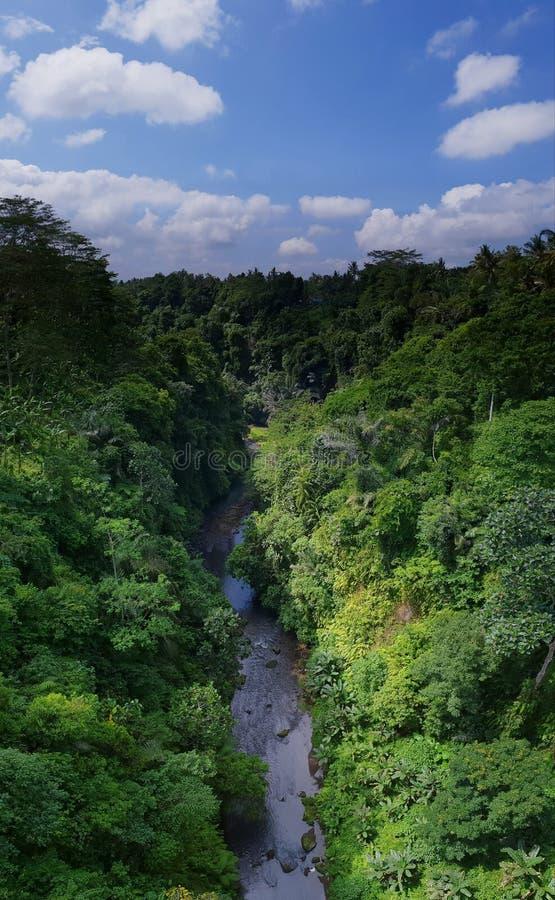 密林在巴厘岛 免版税库存照片