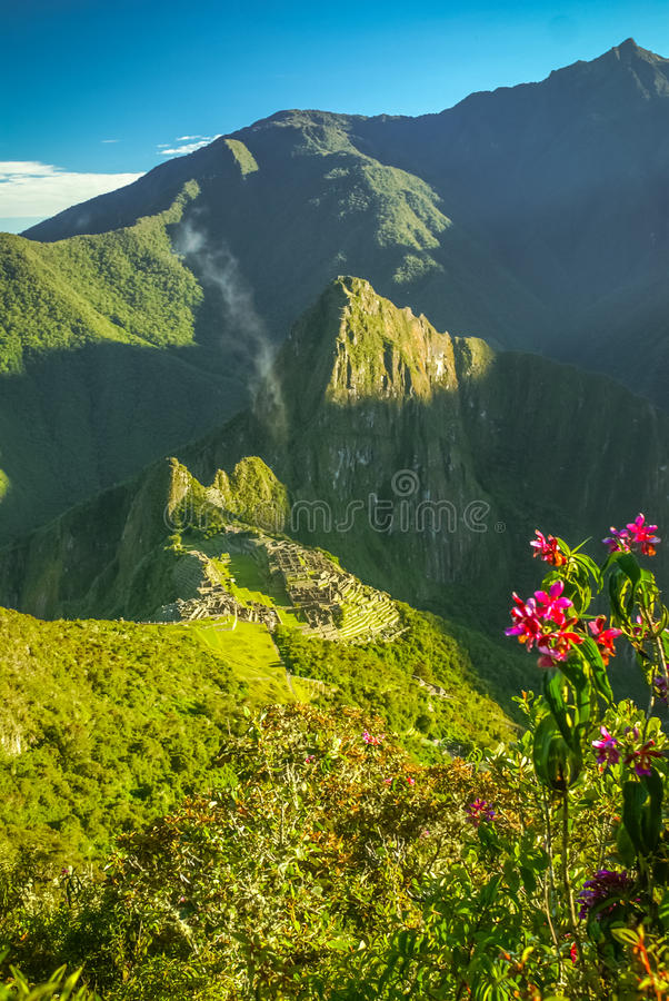密林在秘鲁 免版税图库摄影