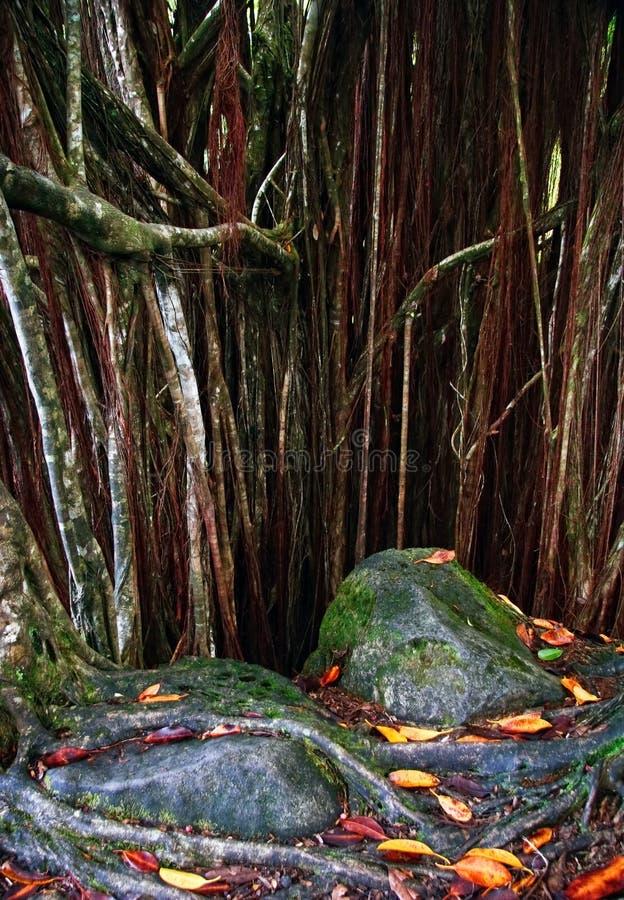 密林根源结构树 免版税库存图片