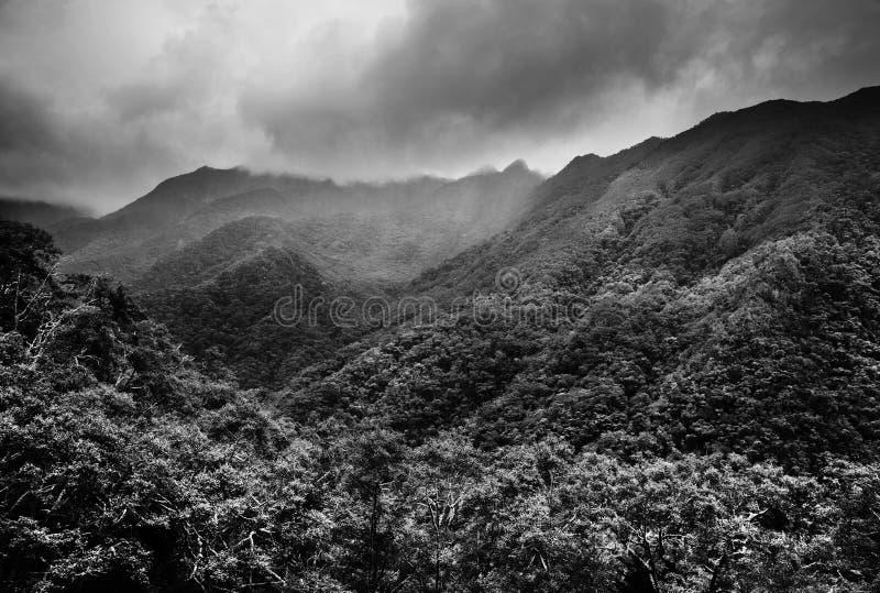 密林森林-中央的山脉 库存照片