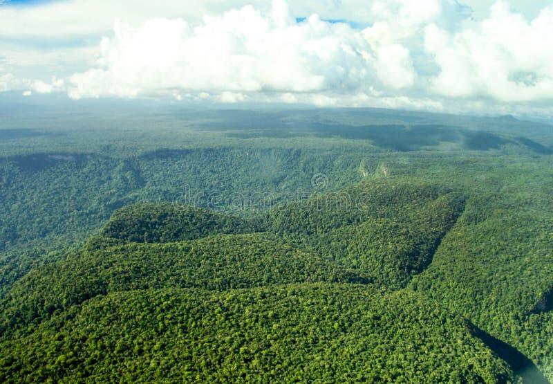 密林的概略的看法有小山山的 免版税库存图片