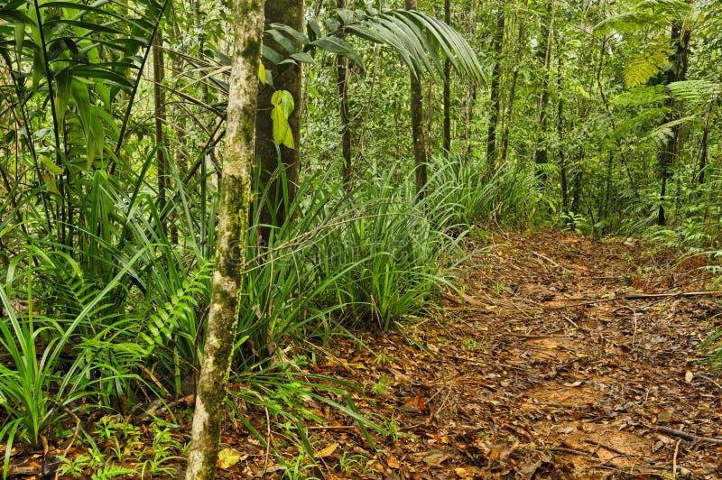 密林足迹,哥斯达黎加 免版税库存照片